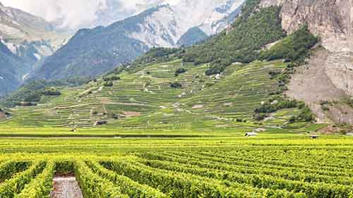 Rhone Valley Wine Tasting